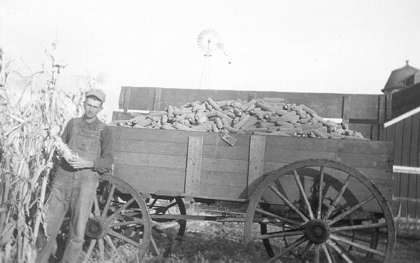 Wagon full of corn picked by hand